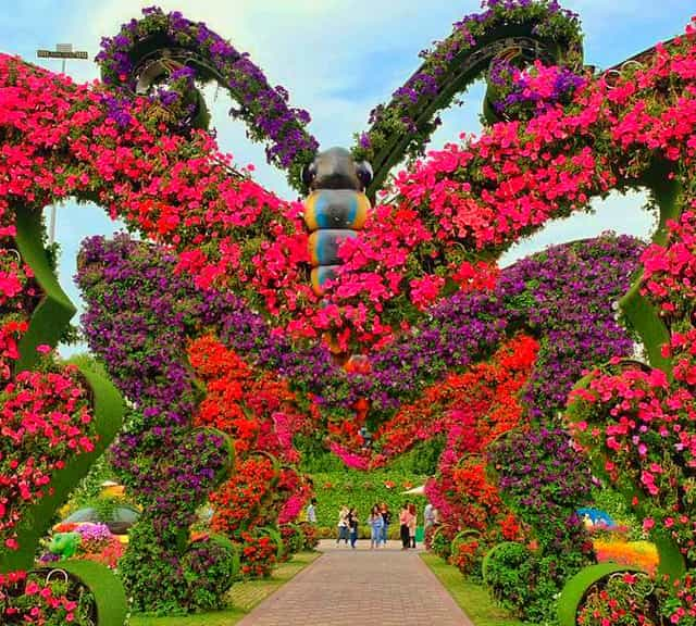 Butterfly Passage is decorated with Petunia flowers at the Dubai Miracle Garden