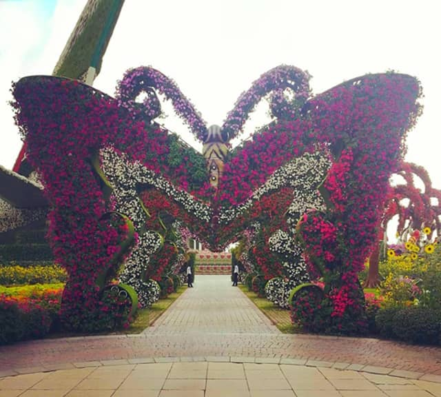Butterfly Passage is introduced in season six of the Dubai Miracle Garden.