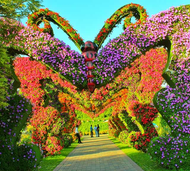 Structure of Butterfly Passage at the Dubai Miracle Garden