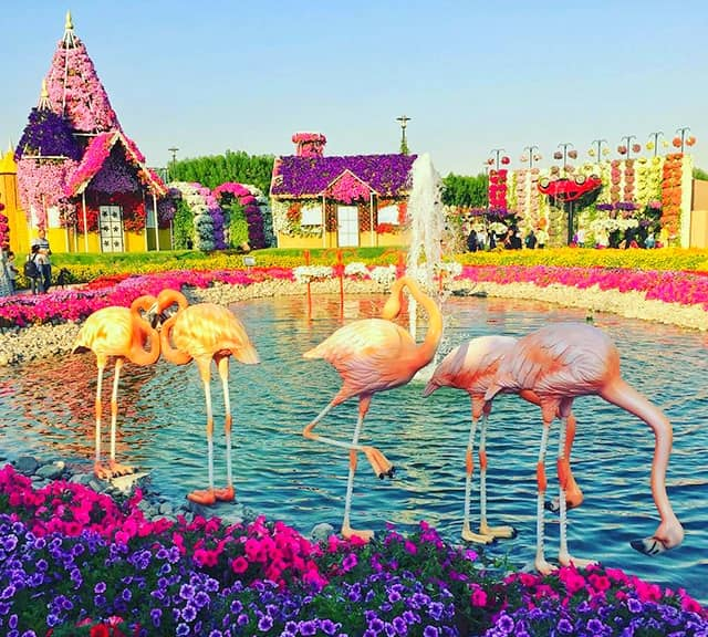 Flamingo Sculptures were first introduced at the Dubai Miracle Garden in 2015.