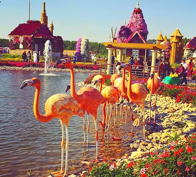 Size of the Flamingo Sculptures at the Dubai Miracle Garden.