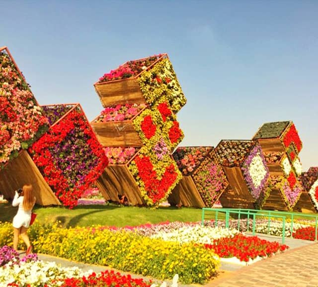 Floral Boxes were introduced at the the Dubai Miracle Garden in 2015.