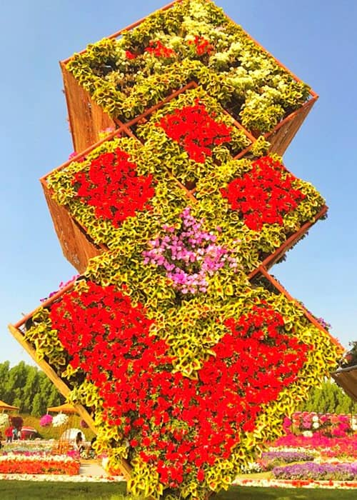 Petunia and Coleuses flowers have been used to decorate floral boxes at the Dubai Miracle Garden.