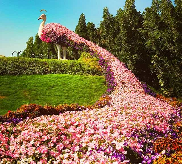 Floral Peacocks at Dubai Miracle Garden are of various sizes from big to small.
