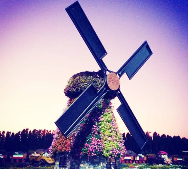 Floral Windmill Photograph at the Dubai Miracle Garden.