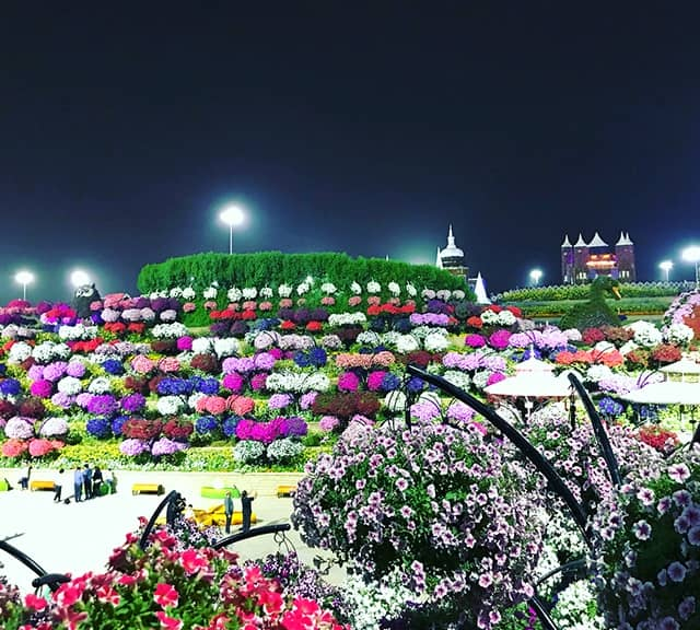 Flower Hill comprises of colorful flowers at the Dubai Miracle Garden.