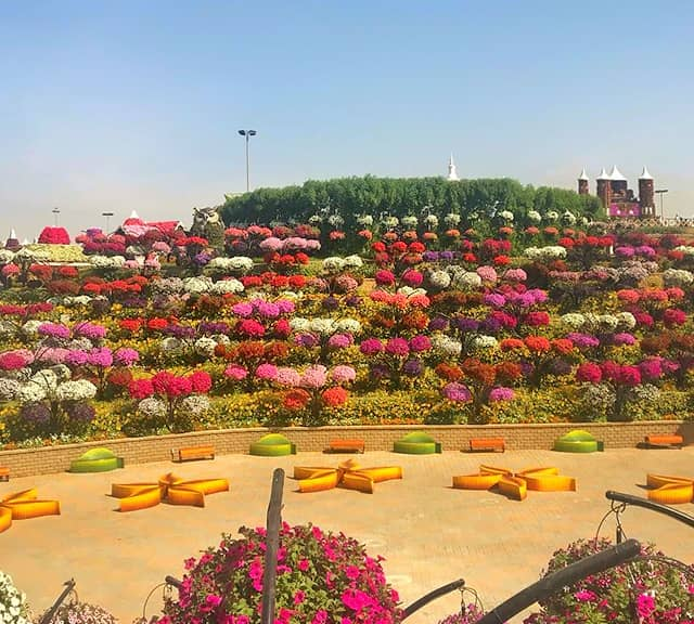 The Flower Hill area is very spacious at the Dubai Miracle Garden.