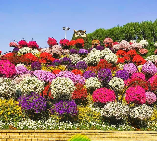 The theme of the Flower Hill holds a huge degree of popularity among the visitors of the Dubai Miracle Garden