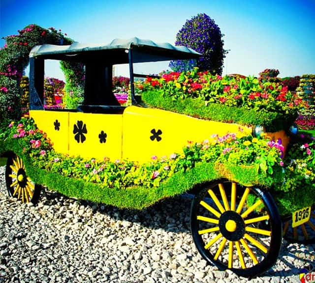 Introduction of the Ford's Model-T Car at the Dubai Miracle Garden.