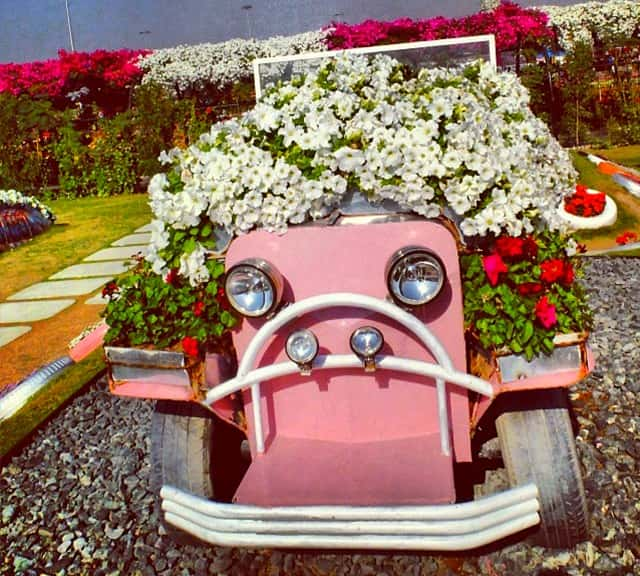 Petunia flowers are decorated on Ford's Model-T Car at the Dubai Miracle Garden.
