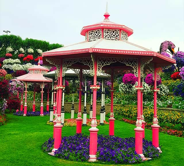 Gazebos are decorated with Petunia flowers at the Dubai Miracle Garden.