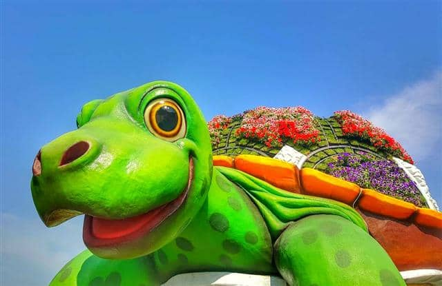 A giant tortoise welcomes visitors of the Dubai Miracle Garden