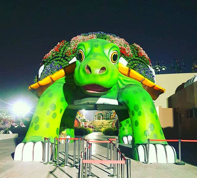 Giant Tortoise of Dubai Miracle Garden has a huge size