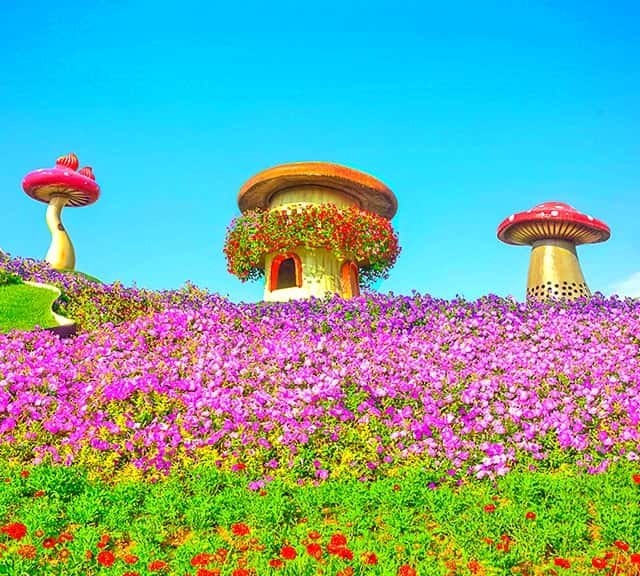 Dubai Miracle Garden continuous improvement