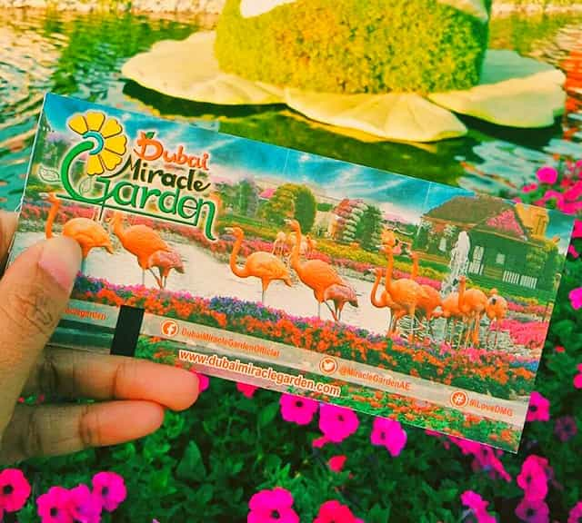 Affordable Ticket Price of Dubai Miracle Garden.