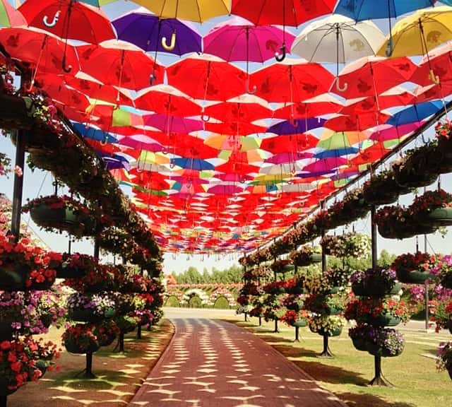 Umbrella passage is decorated with Petunia flowers