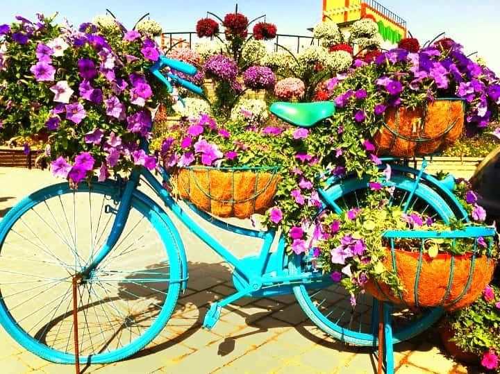 Urban Bicycles attached and fixed to the ground at the Dubai Miracle Garden