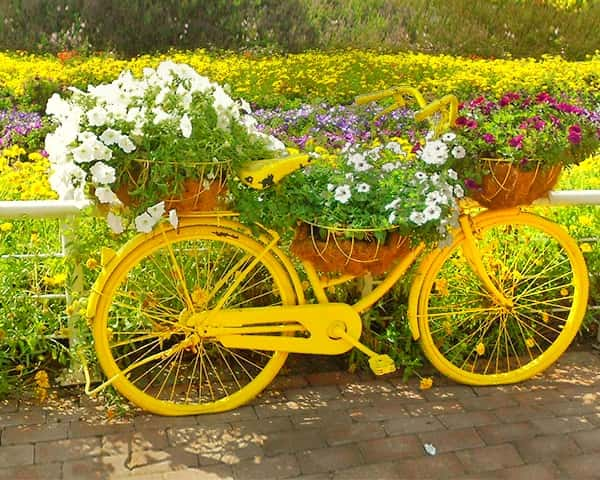 Urban Bicycles - Candy Colored - Dubai Miracle Garden