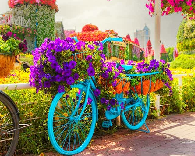 Urban Bicycle introduction at the Dubai Miracle Garden
