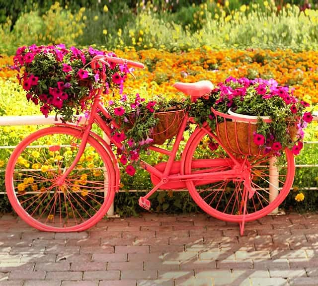 Urban Bicycles at the Dubai Miracle Garden