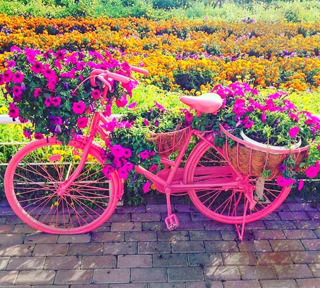 Urban Bicycles with Petunia Flowers at the Dubai Miracle Garden